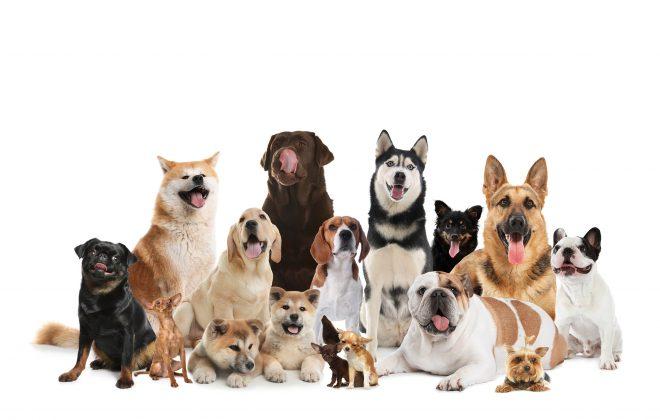 Zbiórka karmy dla psów